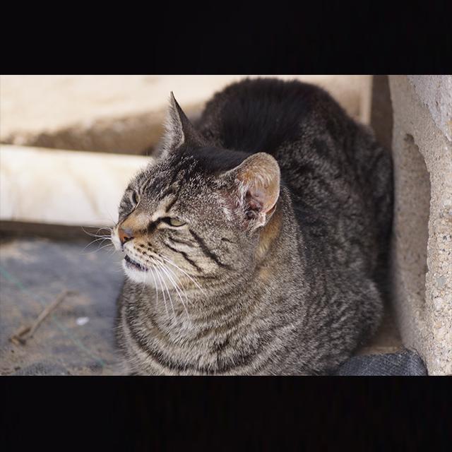meme-Cat