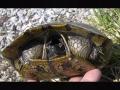 meme-Turtle-shy