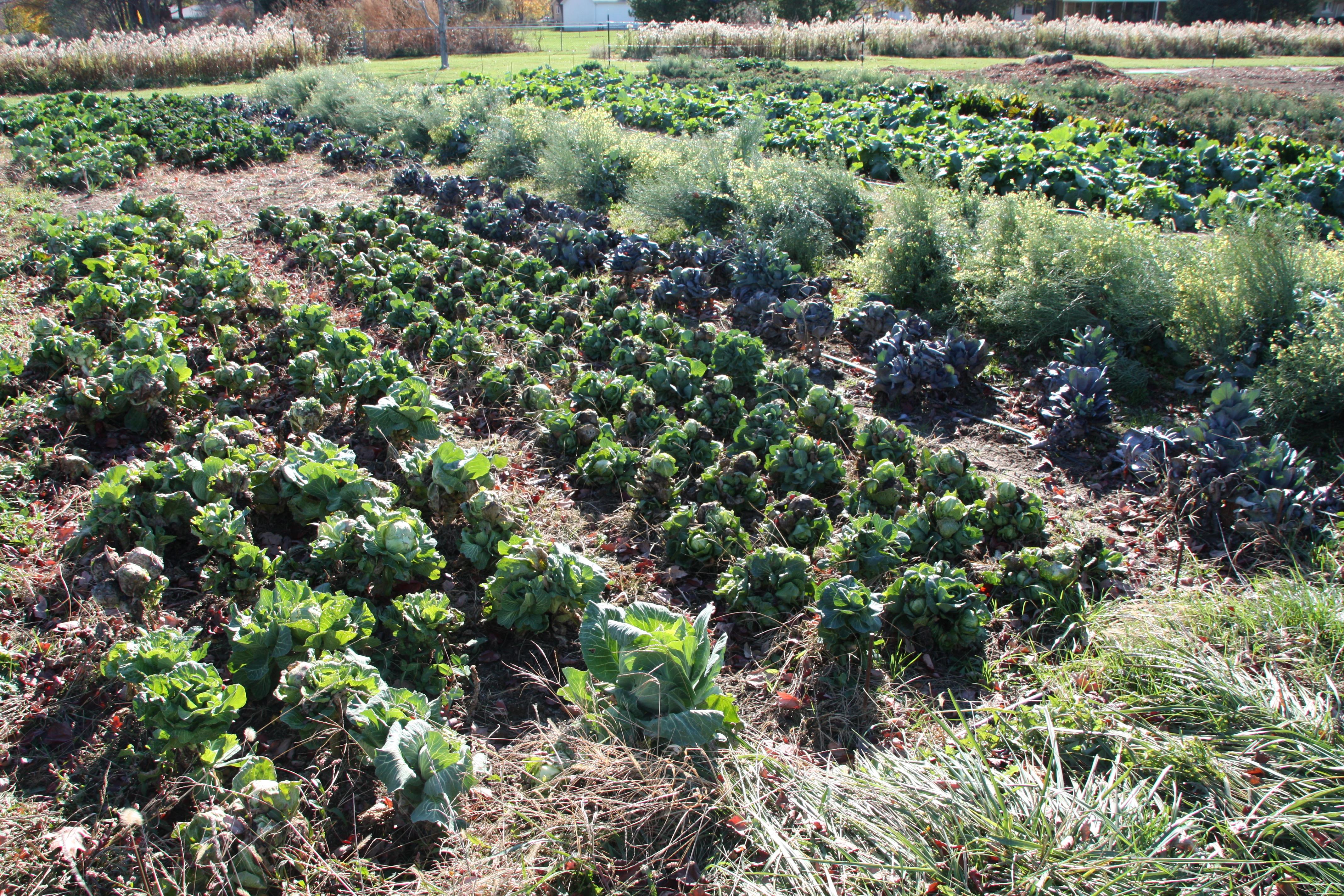 Jubilee Farm Garden 2