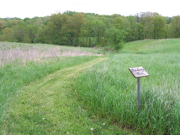Jubilee Farm Walking Path 1