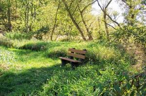 Jubilee Farm Path, Summer