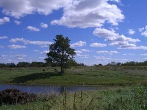 Jubilee Farm Scenery