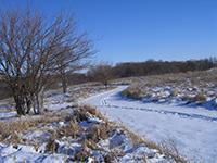 Jubilee Farm Snow 2