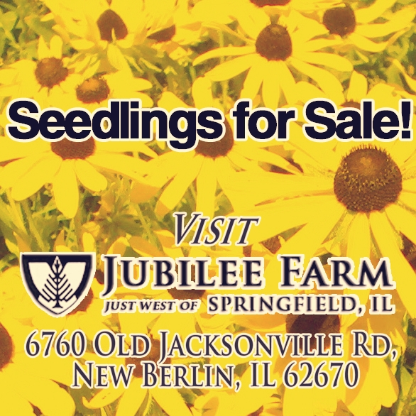 Seedlings_for_Sale_blackeyed_Susans_HT