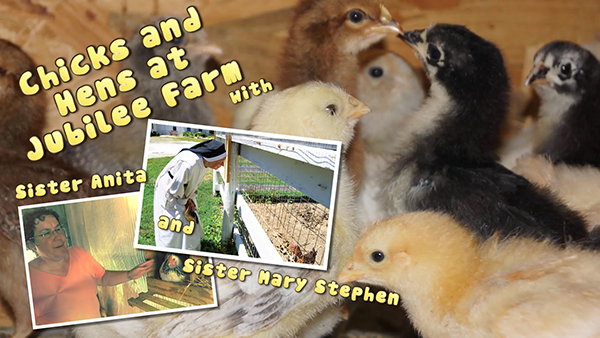 Chicks_and_Hens_6-27-16_title_card_web