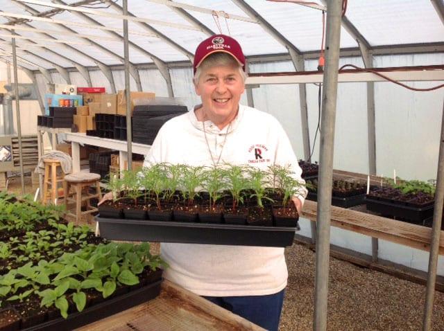 Sister_Suzanne_Jubilee_Farm_Seedling_Sale